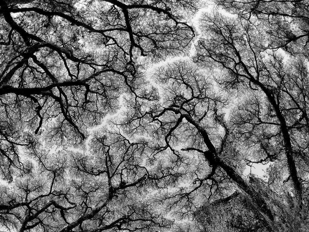 Tanzanian-acacia.jpg