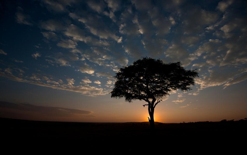 Acacia-Sunrise.jpg