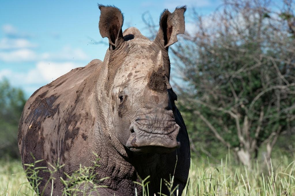 rhino-in-Namibia.jpg